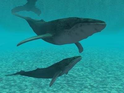 クジラ水中.jpg