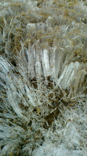 霜柱Lサイズ