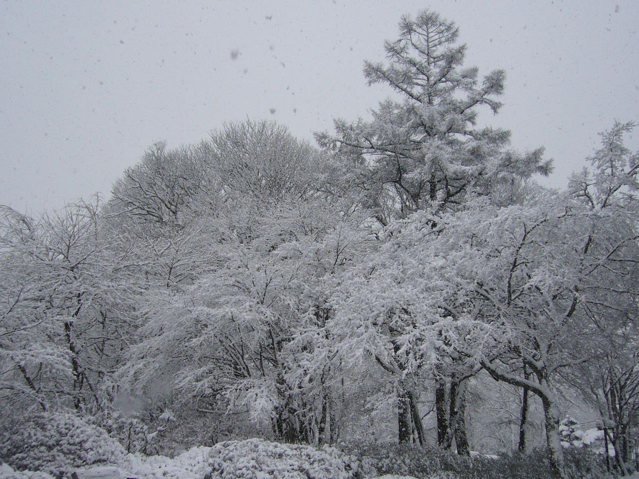 2007.1.6軽井沢この冬一番の雪.JPG