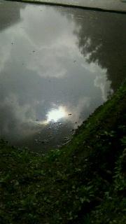 梅雨の田圃