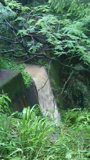 招かざる滝