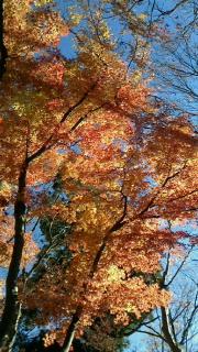 高尾山私的ベスト紅葉!