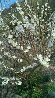 早春の盛り