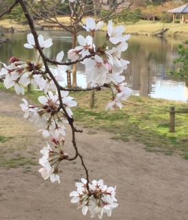 旧芝離宮恩賜庭園のハナ