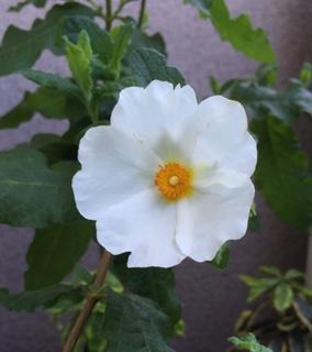 花の命は・・