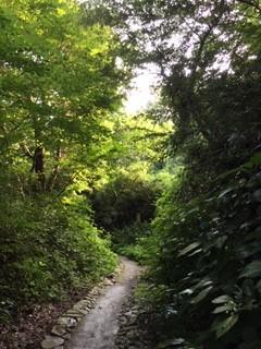 緑(あお)の洞穴