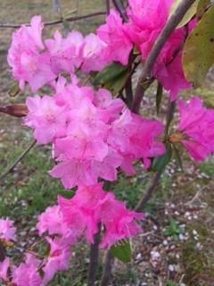桜の次には